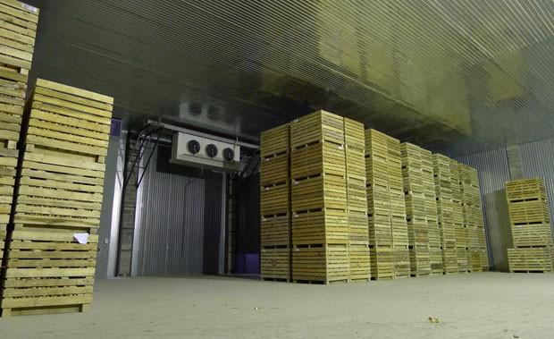 Продажа фруктов и овощей оптом по доступным ценам со склада