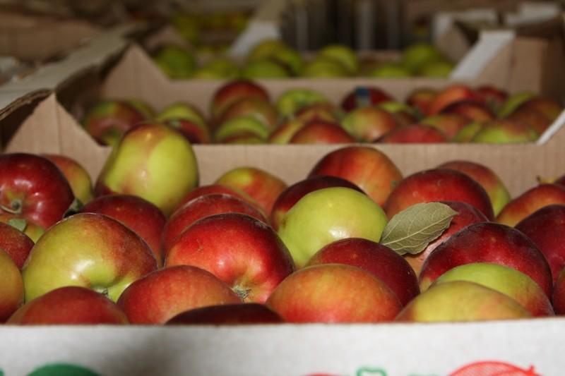 Продажа фруктов и овощей оптом со склада