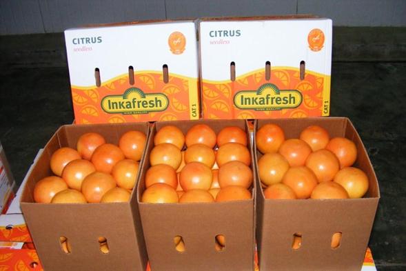 Апельсины оптом по доступным ценам