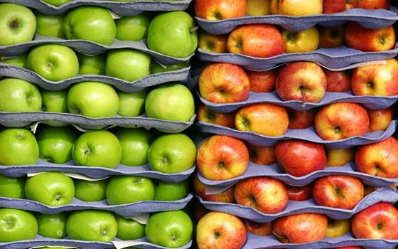 Где купить оптом свежие яблоки зимой?