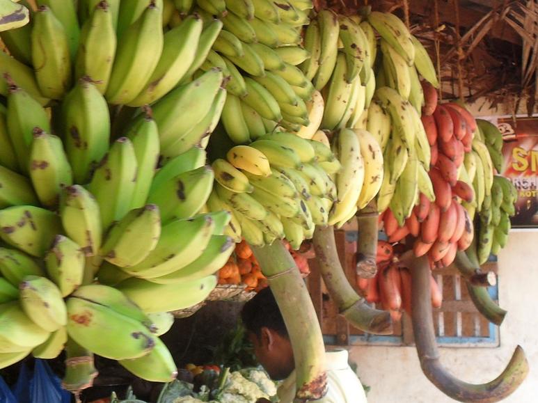 Виды и сорта бананов