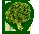 Зелень оптом