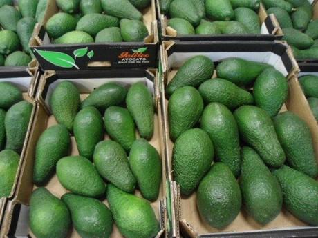 Авокадо (ЮАР) оптом