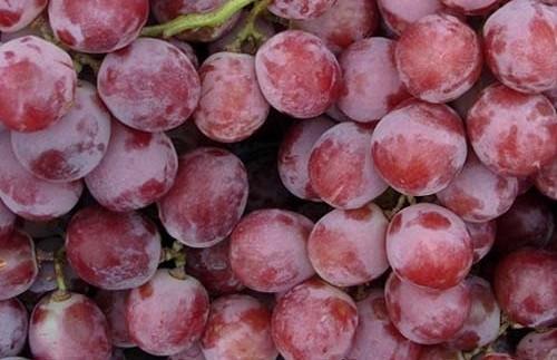 Виноград Red Globe оптом