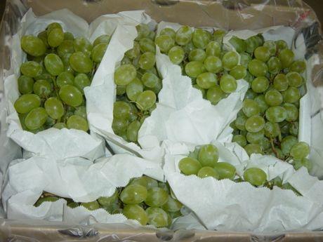 Виноград белый оптом