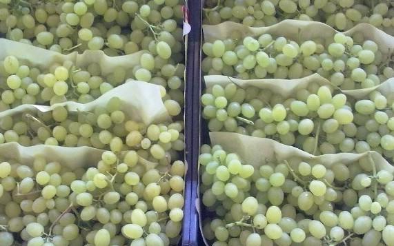 Виноград киш-миш оптом