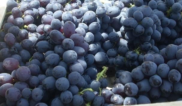 Виноград киш-миш черный оптом