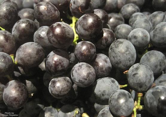 Виноград черный оптом