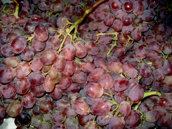 Виноград Тайфи оптом
