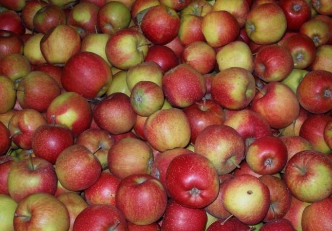 Яблоки (Россия) оптом