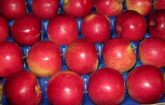 Яблоки Айдаред (Сербия) оптом