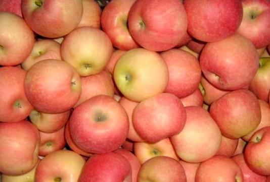 Яблоки Роял Гала (Сербия) оптом