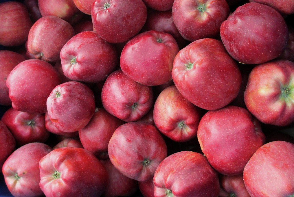 Яблоки Глостер оптом
