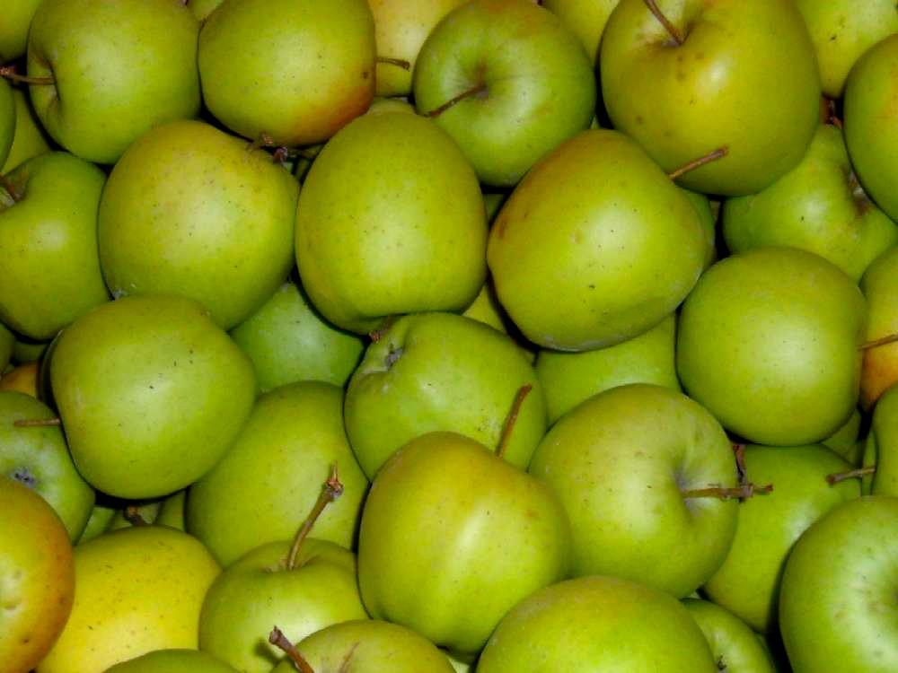 Яблоки Голден (Сербия) оптом