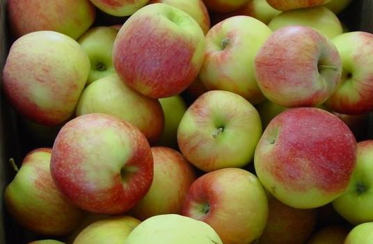 Яблоки Джонагольд (Сербия) оптом