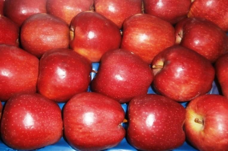Яблоки Ред Чиф (Македония) оптом