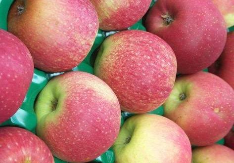 Яблоки Пинк Леди (Аргентина) оптом