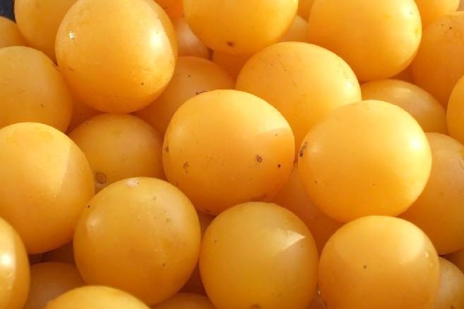 Слива желтая оптом