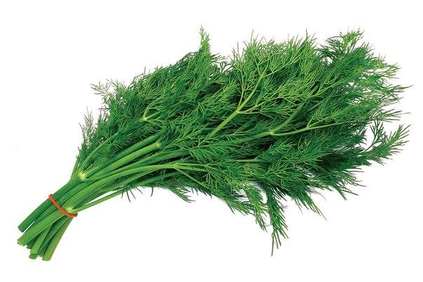 Укроп зелень (Россия) оптом