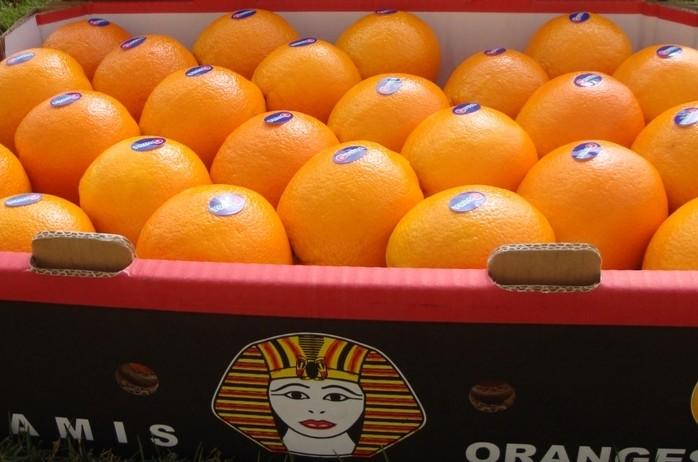 Апельсины (Египет) оптом