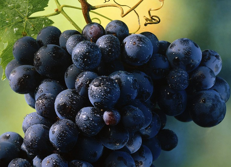 Виноград черный (Россия) оптом