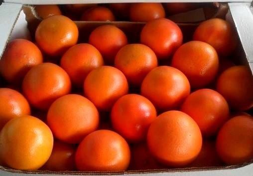 Грейпфрут (Израиль) оптом