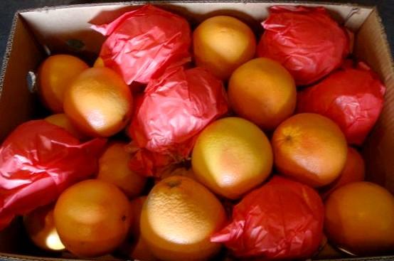 Грейпфрут (Турция) оптом