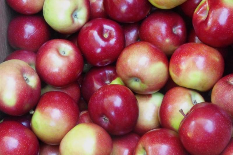 Яблоки Прима оптом