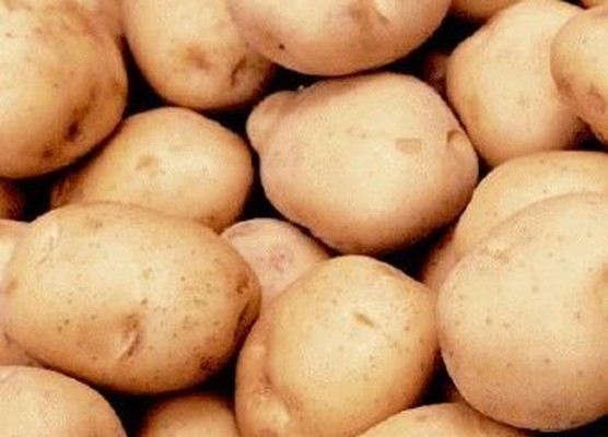 Картофель имп. (Египет) оптом