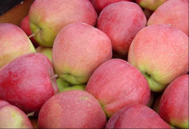 Яблоки Глостер Македония оптом