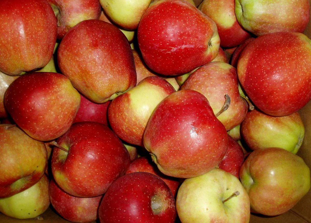 Яблоки Джонаголд Сербия оптом