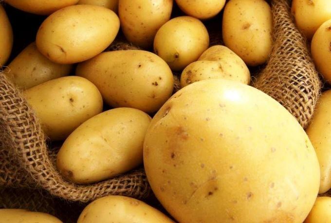 Картофель ранний Россия оптом
