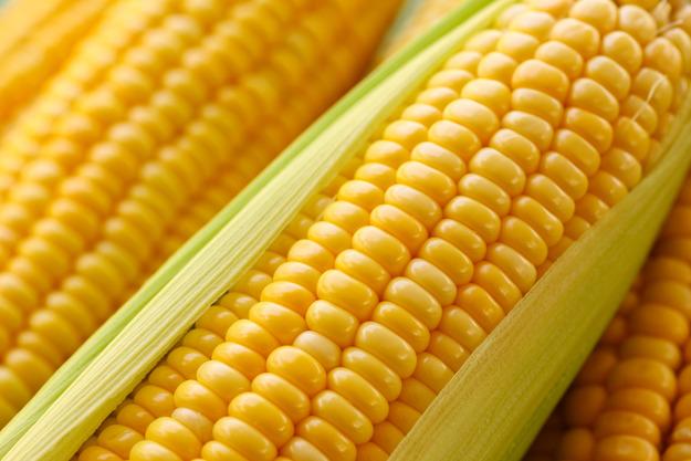 Кукуруза вареная Россия оптом