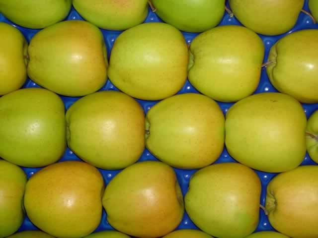 Яблоки Голден (Македония) оптом