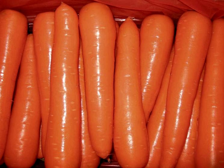 Морковь мытая (Израиль) оптом