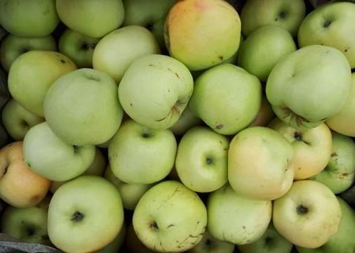 Яблоки Антоновка (Россия) оптом