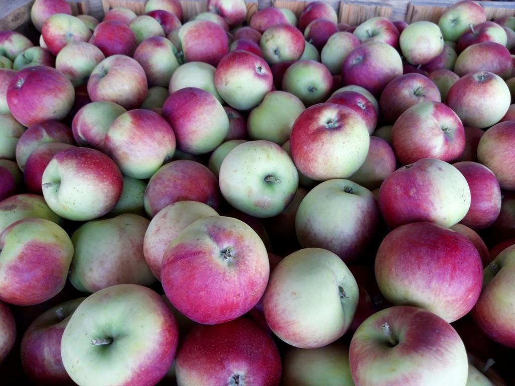 Яблоки Вишневое (Россия) оптом